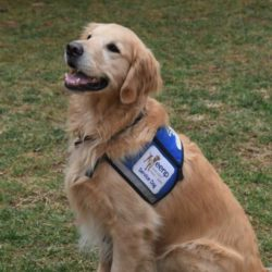 servicehunden duncan i sin väst