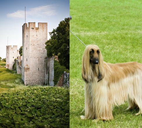 Dags att anmäla till Gotland Dog Show