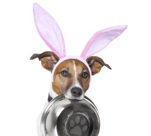 10 skäl att bara ha hundar som gäster i påsk