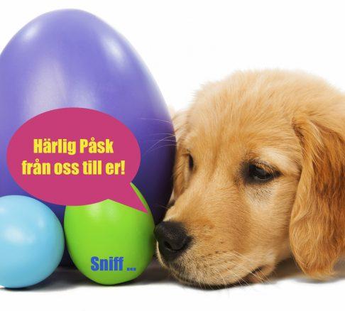 glad påsk från söt goldenvalp & Härliga Hunds redaktion