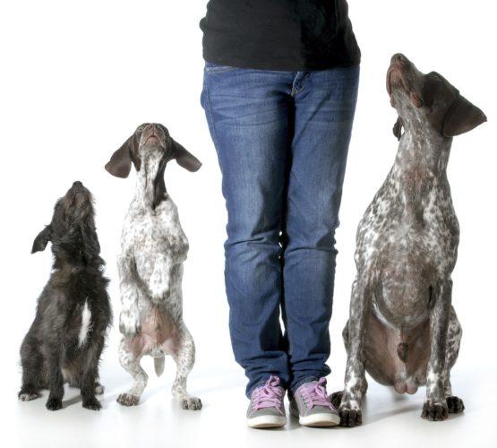 tre hundar som tittar upp mot människa