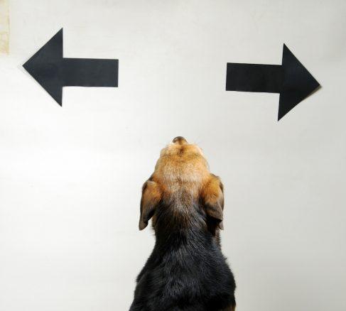 Hund mellan två pilar som riktas åt varsitt håll
