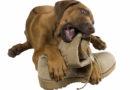 17 irriterande saker som hundar gör
