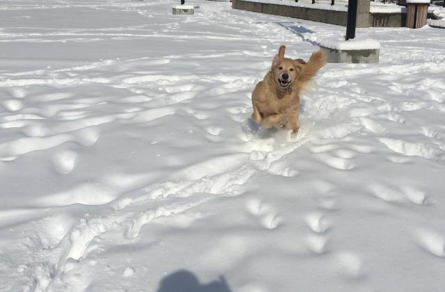 duncan glad i snön