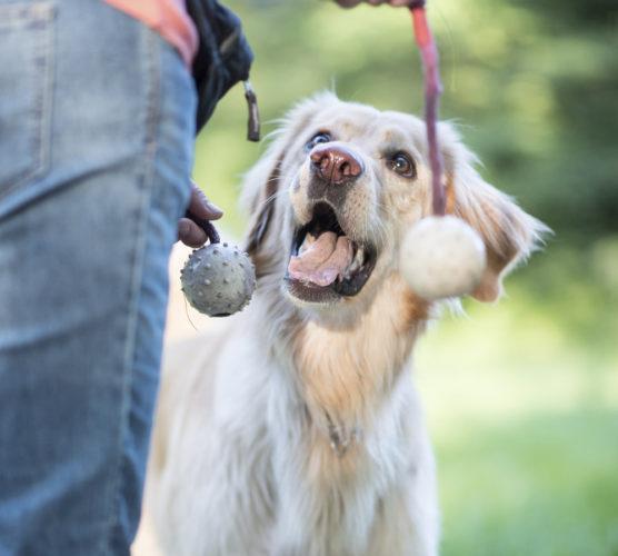 5 roliga tips för dig och din hund