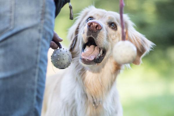 5 roliga lekar för dig och din hund