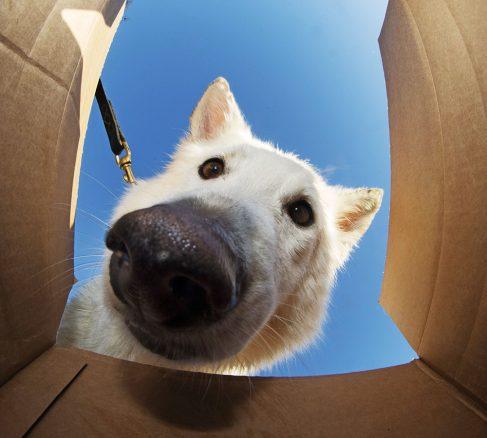 Nosework – kul hundsport!