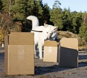Det är viktigt att börja med några få lådor så att hunden får lära sig hur den ska göra. Tre lådor brukar vara en bra start. Sedan kan de utökas till ett tiotal lådor.