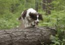 Prova på skogsagility
