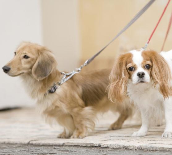 """Var med och stötta Hundar utan hem med """"Hundpromenaden"""""""