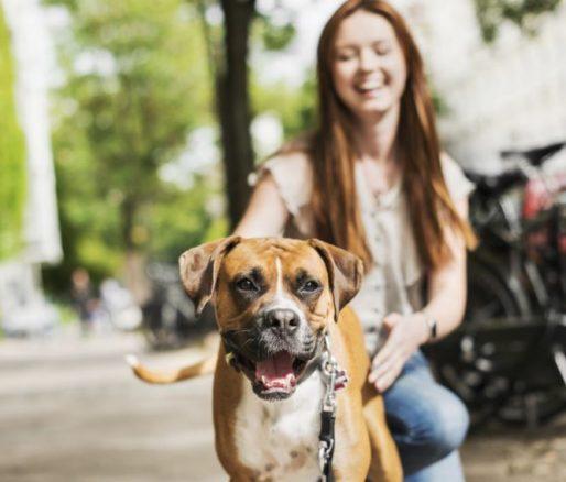 Stipendium för unga hundsportare