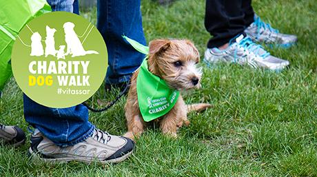 charitydogwalk