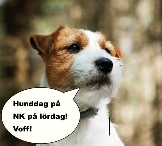 Jack russel som säger: Hunddag på NK