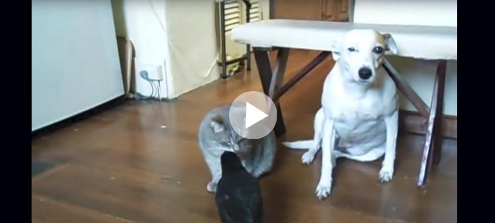 Fågeln, katten och hunden som lever tillsammans