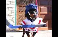Crusoe och Oakley spelar hockey, fast med tennisbollar