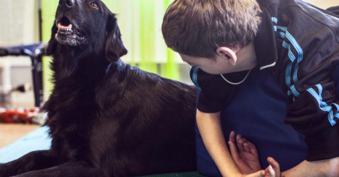 terapihundar hjälper barn med funktionsnedsättning