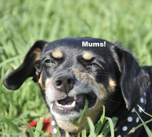 hund äter gräs