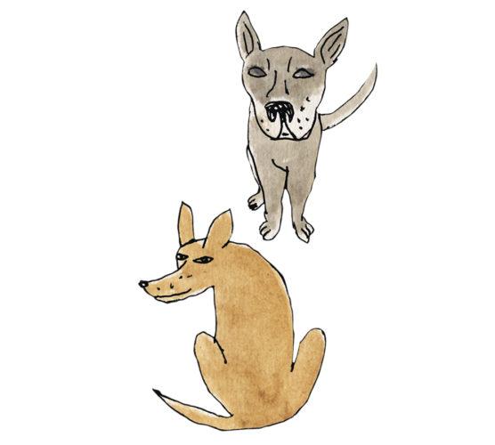 Hjältehunden Maddox