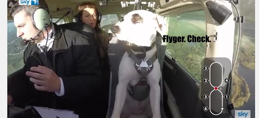 Hunden sitter bredvid pilot i cockpit och flyger