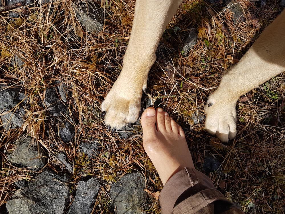 tassar och en fot