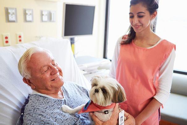 Hund på besök hos husse i sjukhussäng