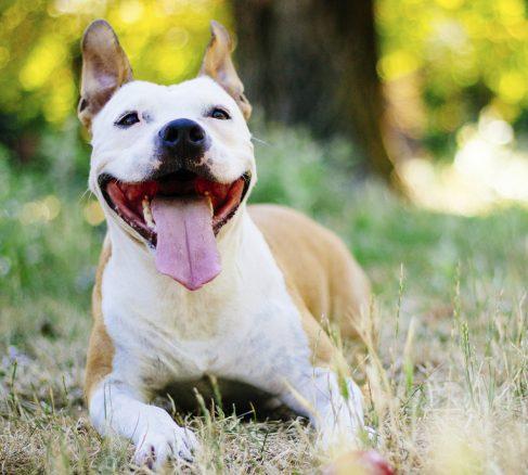 Är hunden verkligen renare i munnen än människan?