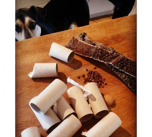Koi tittar på vad matte har lagt fram på bordet