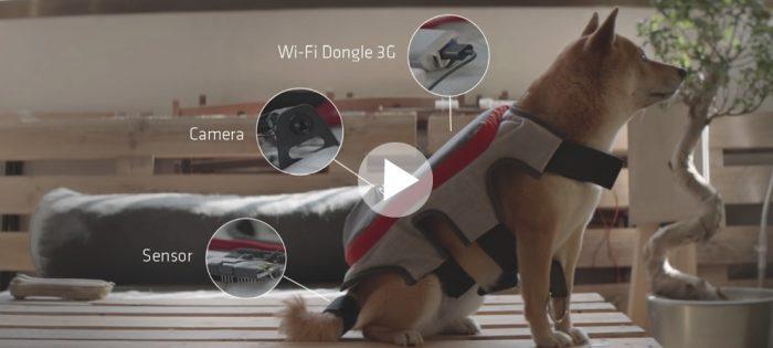 Nu kan din hund fota själv – och ladda upp på Facebook