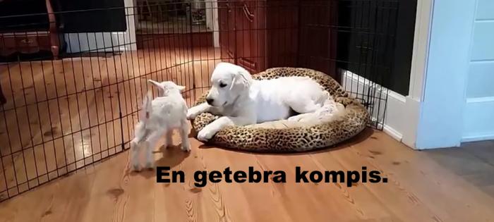 söt killing och hundvalp leker ihop