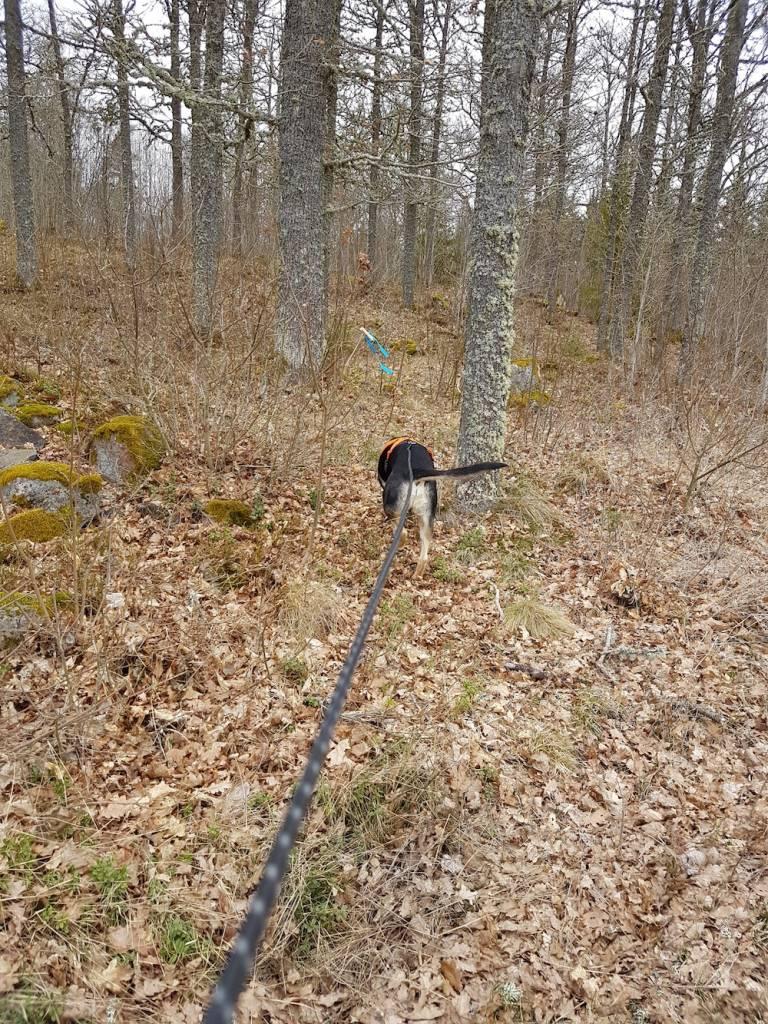 koi på långlina i skogen