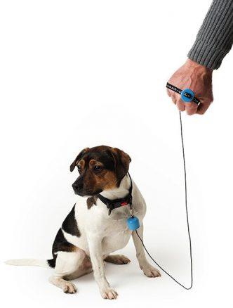 leash-on