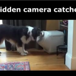hund som stjäl mat ur stor burk