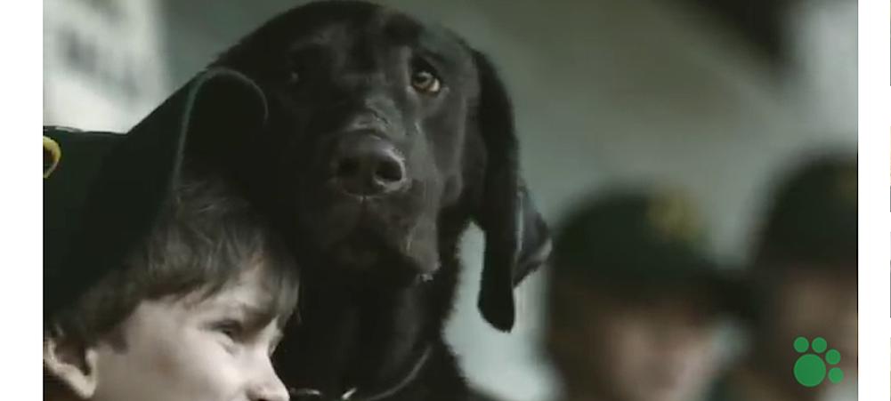 Pojke med labrador