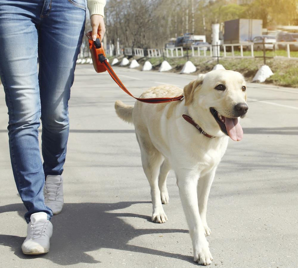 På promenad, hund och matte