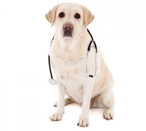 Hudtumörer vanligast hos husdjur