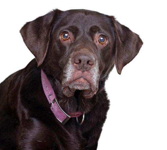 11 krämpor som kan drabba den gamla hunden