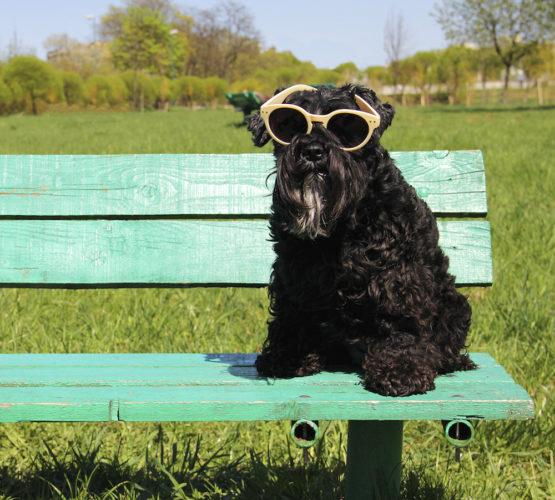 Behöver hunden solglasögon?