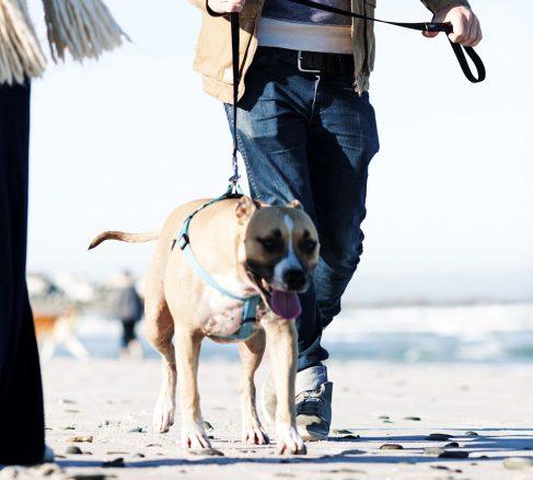 Promenera till förmån för hemlösa hundar
