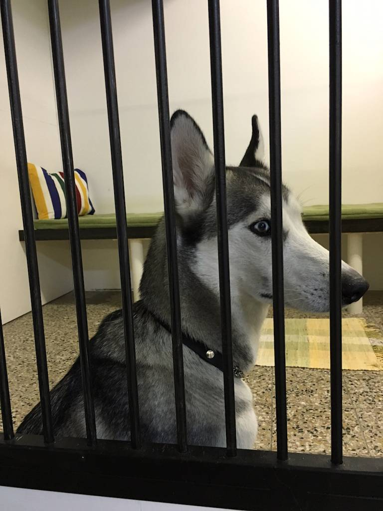 Söt hund som går på dagis
