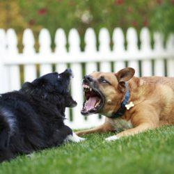 hundar som varnar