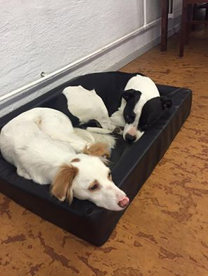 2 hundar myser i en bädd