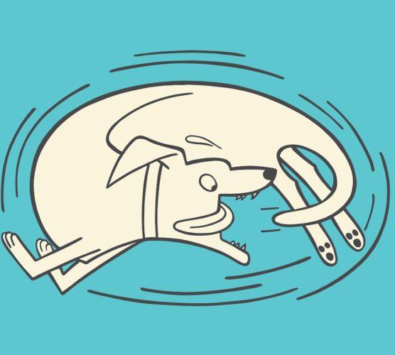illustration av hund som jagar svans