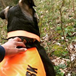 Koi och Carro i skogen strax innan på släpp på personsök.