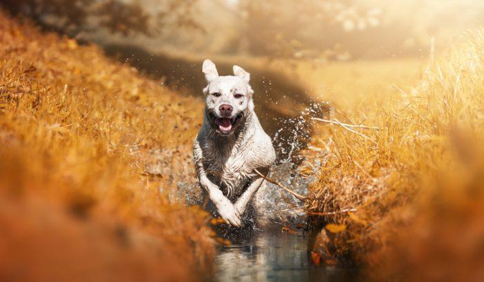 Har din hund ett bra hundliv?