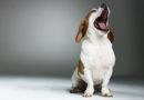 Stressreaktioner hos hund
