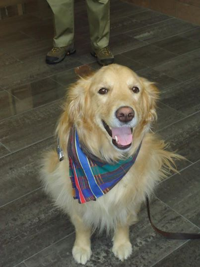 Trösthunden Gracie.