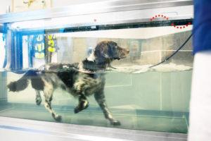 Alltfler hundar rehabiliteras