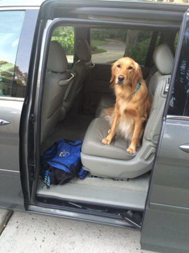 Trösthunden Sasha på väg mot Orlando