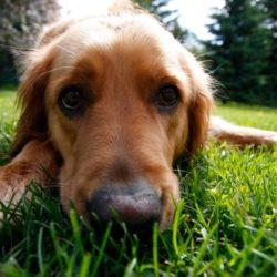 Söt hund i sommargräs