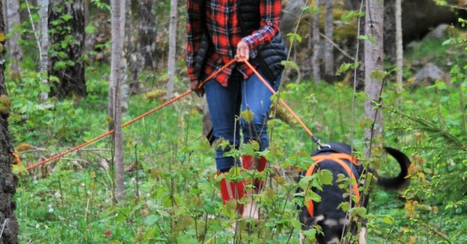 att spåra i skogen
